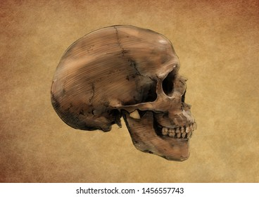 SKULL SIDE VIEW COLOUR PENCIL DRAWING ON BROWN BACKGROUND