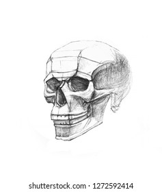 Skull in side view. Pencil drawing isolated on white background. Body anatomy, medical illustration