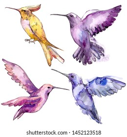 Sky bird colibri in a wildlife isolated. Wild freedom, bird with a flying wings. Watercolor background set. Watercolour drawing fashion aquarelle. Isolated hummingbird illustration element.