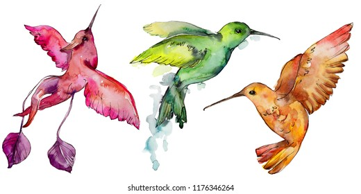 Sky bird colorful colibri in a wildlife by watercolor style isolated. Wild freedom, bird with a flying wings. Aquarelle bird for background, texture, pattern, frame, border or tattoo.