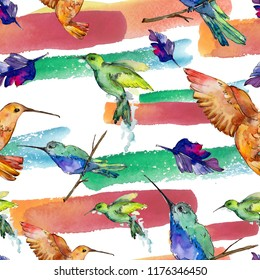 Sky bird colorful colibri in a wildlife by watercolor style. Seamless background pattern. Fabric wallpaper print texture. Bird with a flying wings. Aquarelle bird for background, texture, pattern.