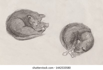 sleeping cat drawing by pencil