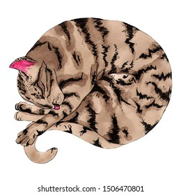 Sleeping cute brown-gray striped cat. Isolated illustration of a colored cat glomerulus on a white background