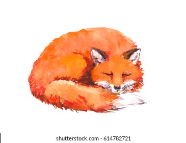 Sleeping fox animal. Watercolor