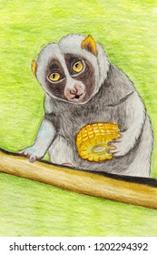 slender loris monkey, hand drawn with colured pencils on watercolour paper
