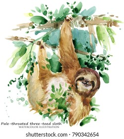 Sloth. tropical animal watercolor illustration
