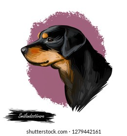Smalandsstovare Smaland dog Swedish breed of dog digital art. Watercolor portrait of pet muzzle closeup, pet looking in distance, Scandinavian hound animal with smooth haired coat doggy clipart.