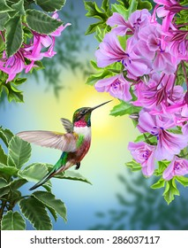 small bird hummingbird on a background of pink flowers and green leaves