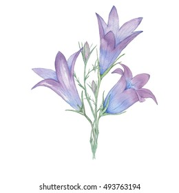 small Bouquet of bells flowers . Watercolor painting. Hand drawing. Decorative element for greeting card, Invitation card.
