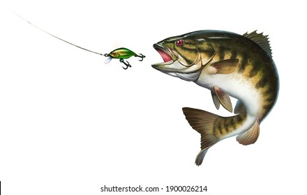 Smallmouth bass jumps out of water illustration isolate realistic.  Big smallmouth Bass perch fishing in the usa on a river or lake at the weekend. Bass hunts for the golden wobbler bait.