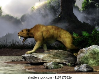 A smilodon bears its wicked saber teeth.  The now extinct animal stands on a rock by a pond in a Pleistocene era forest. 3D Rendering