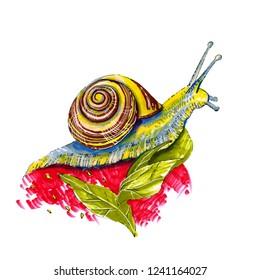 Snail mollusk slug slimy art illustration isolated creative colorful house home spiral