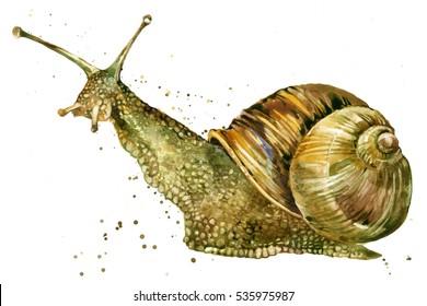 snail watercolor illustration