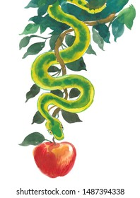 Snake and apple fruit. Ink and watercolor illustration