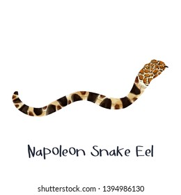 snake eel exotic animal realistic illustration