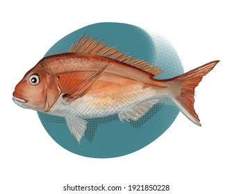 snapper fish on a white background