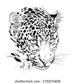 snarling face of a leopard painted by hand on a white background tattoo