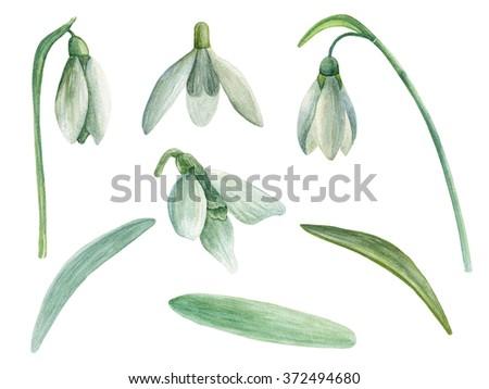 Snowdrop Clip Art Spring Flowers Watercolor Stock Illustration