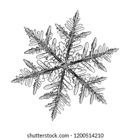 Snowflake isolated on white background. This illustration based on macro photo of real snow crystal: beautiful stellar dendrite with hexagonal symmetry, complex, ornate shape and six elegant arms.