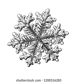 Snowflake isolated on white background. This illustration based on macro photo of real snow crystal: large stellar dendrite with hexagonal symmetry, complex, ornate shape and elegant arms.