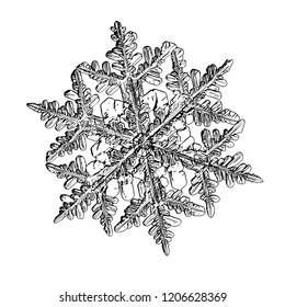 Snowflake isolated on white background. This illustration based on macro photo of real snow crystal: ornate stellar dendrite with fine hexagonal symmetry, complex shape and elegant inner structure.