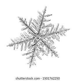 Snowflake isolated on white background. Illustration based on macro photo of real snow crystal: elegant stellar dendrite with fine hexagonal symmetry, complex surface details and six fragile arms.