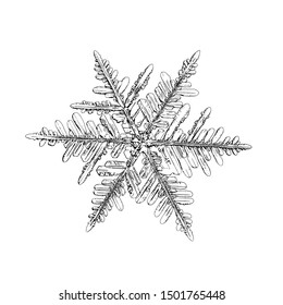 Snowflake isolated on white background. Illustration based on macro photo of real snow crystal: elegant stellar dendrite with fine hexagonal symmetry, ornate shape and complex inner details.