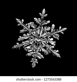 Snowflake on white background. Illustration based on macro photo of real snow crystal: complex stellar dendrite with fine hexagonal symmetry, ornate shape and six thin, elegant arms.