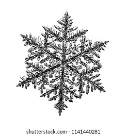 Snowflake on white background. snow crystal: complex stellar dendrite with fine hexagonal symmetry, ornate shape and six thin, elegant arms.
