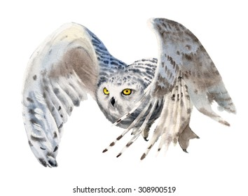 Snowy owl in flight. Watercolor.