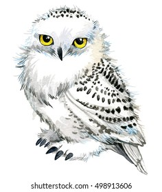 snowy owl illustration watercolor.