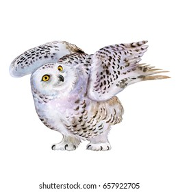 Snowy polar owl in flight isolated on background. Watercolor. Illustration.