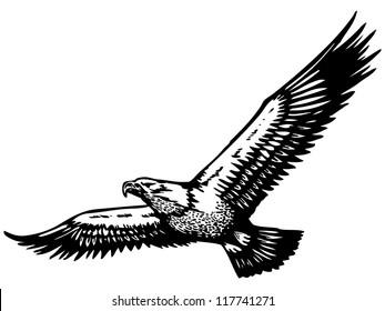 soaring eagle illustration