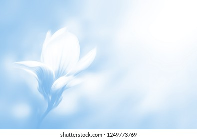Soft focus image of blossoming magnolia flower in spring time with copyspace. Abstract blurred flowers. Intentional motion blur. Nature background in light blue tonality.