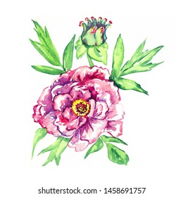 Soft pink-purple peony flower with flaccid bud and green leaves, isolated hand painted watercolor illustration design element for invitation, card, print, posters, patterns