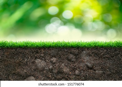 Soil and Green Grass in Beautiful Background