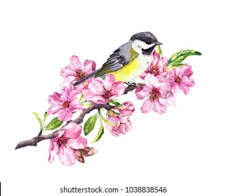 Song bird on cherry blossom branch with spring sakura flowers in springtime. Watercolor