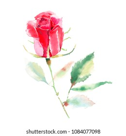Sophisticated wonderful lovely spring summer floral herbal botanical bright red rustic rose with green leaves isolated watercolor hand sketch. Perfect for cards, textile