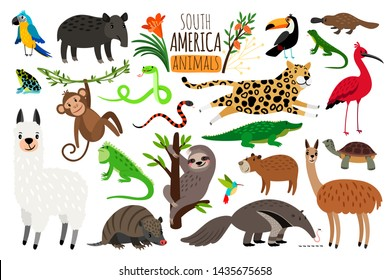 South America animals. cartoon guanaco and iguana, anteater and ocelot, tapir and armadillo isolated on white background