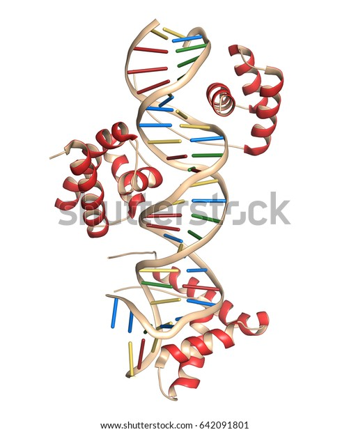 Sox2 (HMG domain) and Oct-1 (POU domain) transcription factors, bound to DNA. 3D rendering based on protein data bank entry 1gt0. Combined cartoon and stick representation.