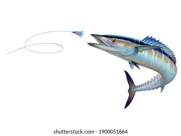 Spanish Mackerel wahoo attacks Bait Sea Swim Squids. Spanish Mackerel wahoo fish big fish on white realistic illustration isolate.