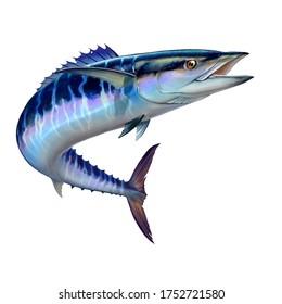 Spanish Mackerel wahoo dark blue fish big fish on white realistic illustration isolate. Oceanic big mackerel green predatory fish with open mouth.