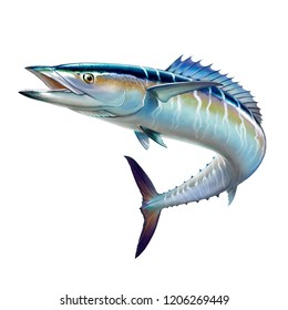 Spanish Mackerel wahoo fish big fish on white realistic illustration isolate.