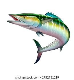Spanish Mackerel wahoo green fish big fish on white realistic illustration isolate. Oceanic big mackerel green predatory fish with open mouth.