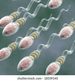 Sperm Cells A group of sperm cells swimming to a target. This picture is excellent for medical presentations or diagrams.