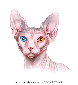 Sphinx cat head isolated on white background hand drawn illustration portrait eyes hairless skin animal purebred