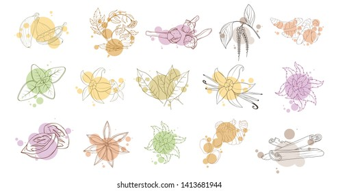 Spices, flavoring set, hand-drawn spices and ingredients, seasonings for food, spice and herbs, flavoring set, flavoring for food, flavor with spice