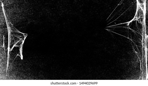 Spiderwebs isolated on black grunge background. Cobweb.  Halloween party holiday design. Texture of spider web. Spooky Halloween black and white decoration. Gothic style. Copy space for your text