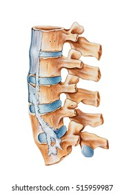 Spine - Ankylosing Spondylitis a condition with the symptoms of lower back pain and stiffness that predominantly affects men, side view.