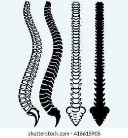 Spine from the front, profile. Isolated on blue background. Raster version